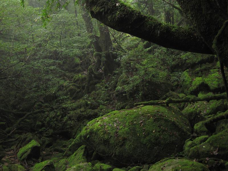 mononoke_forest
