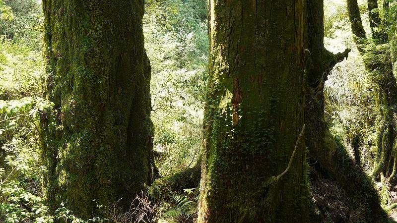 tenmon_forest